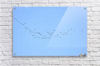 Flock of Geese 3   Acrylic Print