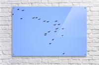 Flock of Geese 2  Acrylic Print
