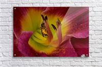 Bee Inside Corn Lily - Landscape  Acrylic Print