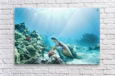 Hawaii, Green Sea Turtle (Chelonia Mydas) An Endangered Species.  Acrylic Print