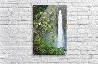 Hawaii, Big Island, Akaka Falls Surounded By Ti-Leafs And Greenery.  Acrylic Print