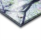 Cherry tree flowers Acrylic print