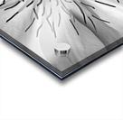 Clematis White Acrylic print