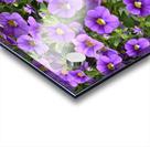 Beautiful Purple Flowers Photograph Acrylic print