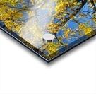 Beautiful Yellow Fall Foliage Acrylic print