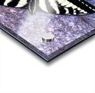 Swallowtail on Stone Wall Acrylic print