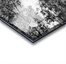 DSC01173 Acrylic print