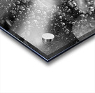 Spiderweb Raindrops B&W Acrylic print