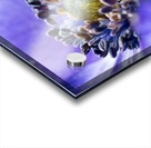 Blue Flower Anemone Close-up Macro Acrylic print