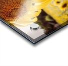 Sunflower with Bee Acrylic print