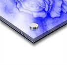 Celestial Rose Acrylic print