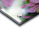 Floral Photography  Acrylic print