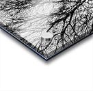 Afridaizy Black & White Trees Threshold029 Acrylic print