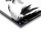Ipanema B&W Acrylic print