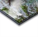 Moose On Golden Pond Acrylic print