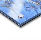 Brindilles glacees Acrylic print