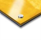 Yellow 44 Acrylic print