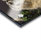Take Watch  Meerkats  Acrylic print
