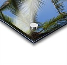 Coconut Palms backlit by the sunlight in a blue sky; Poipu, Kauai, Hawaii, United States of America Acrylic print