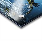 Salamander (Caudata) swimming in water; Tarifa, Cadiz, Andalusia, Spain Acrylic print