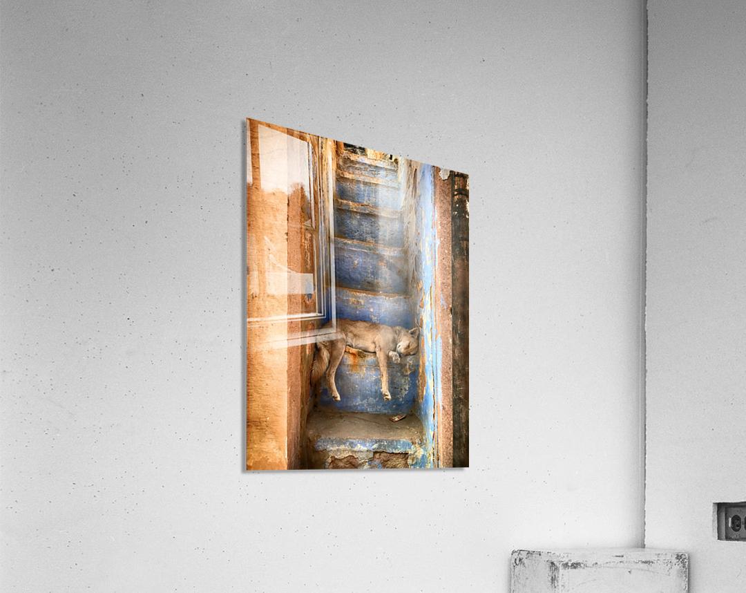 Nap time  Acrylic Print