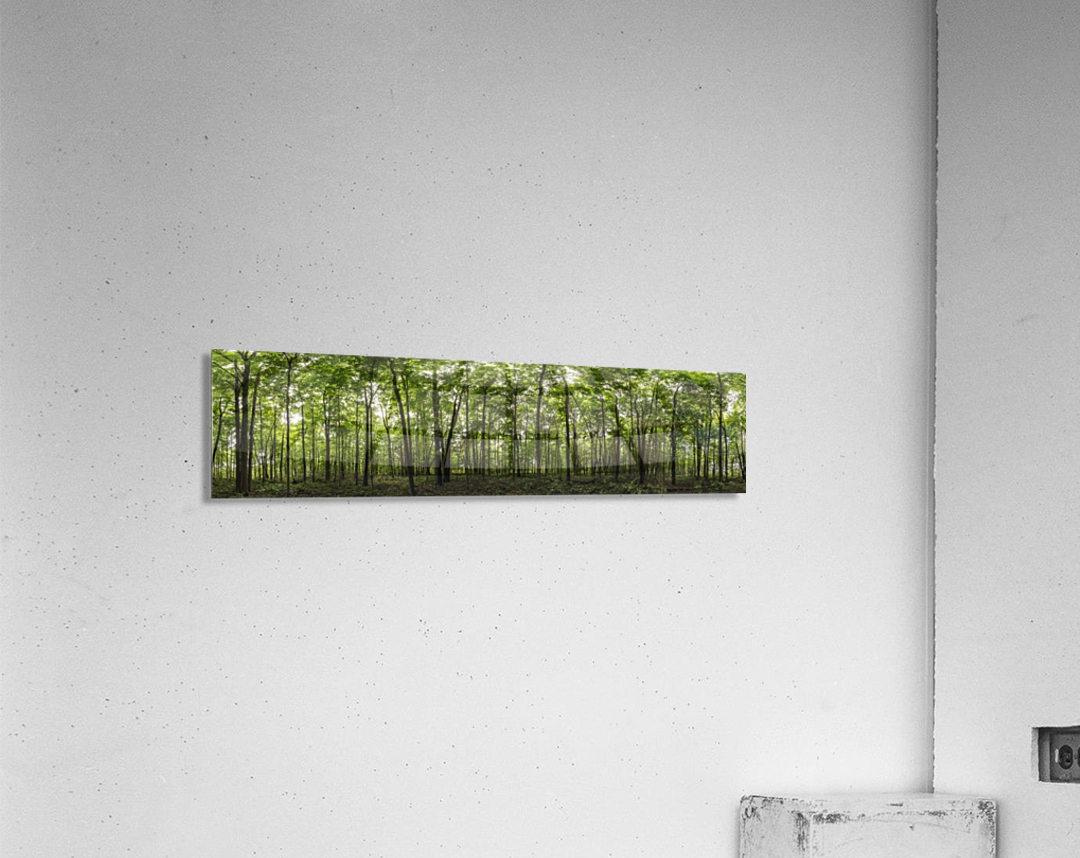 Panoramic image of a deciduous forest; Ontario, Canada  Acrylic Print