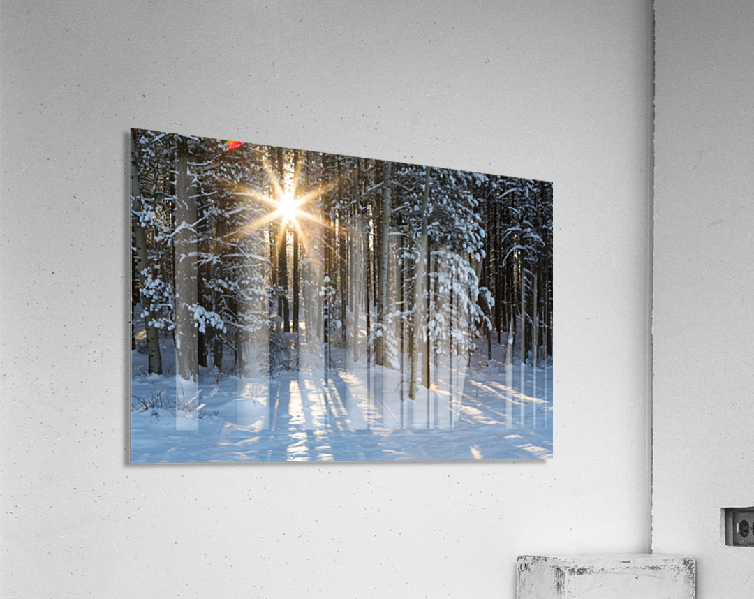 Sunburst coming through a snow covered forest; Kananaskis Country, Alberta, Canada  Acrylic Print