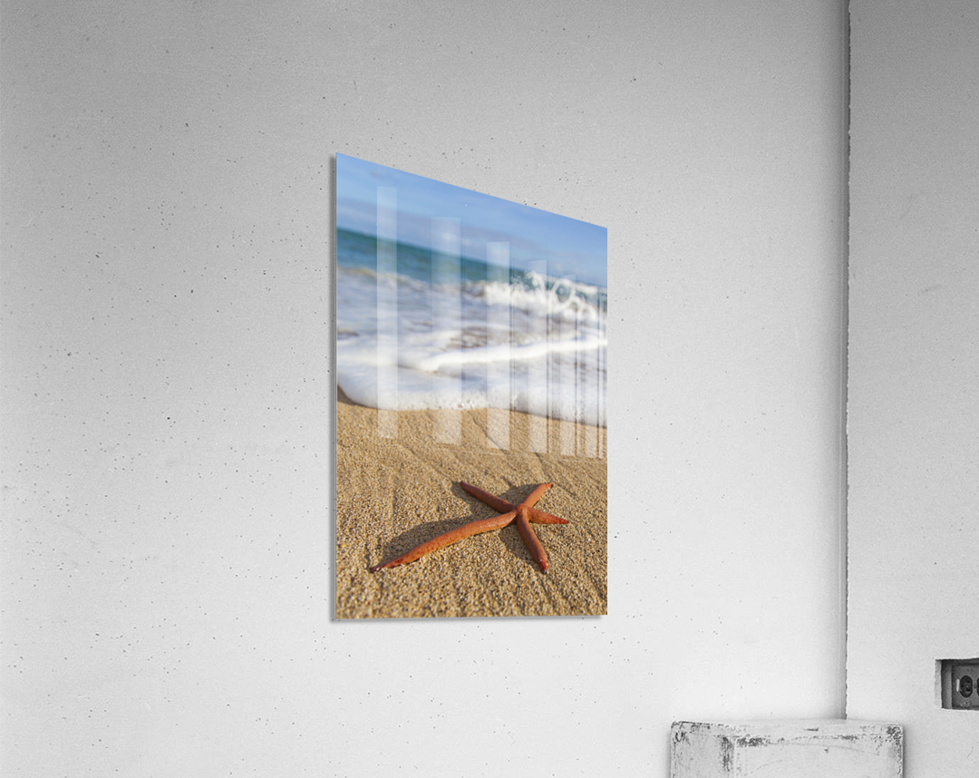 A red live Finger Starfish, also known as Linckia Sea Star, found along a sandy beach with white ocean tide washing up; Honolulu, Oahu, Hawaii, United States of America  Acrylic Print