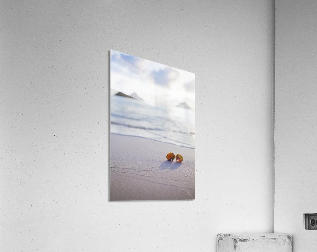 A set of two rare Hawaiian Sunrise Scallop Seashells, also known as Pecten Langfordi, in the sand at Lanikai beach, with Mokulua islands in background; Honolulu, Oahu, Hawaii, United States of America  Acrylic Print