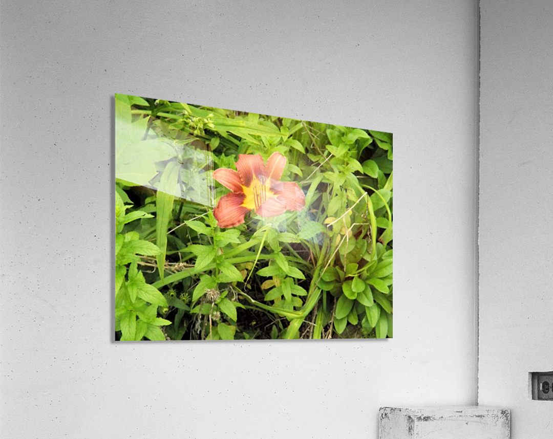 Oranger Lilly 4  Impression acrylique