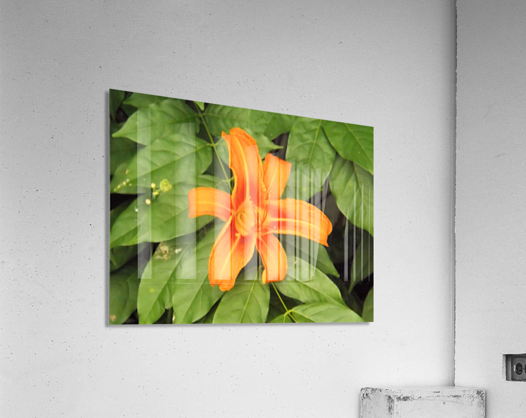 Orange Lilly 1  Impression acrylique