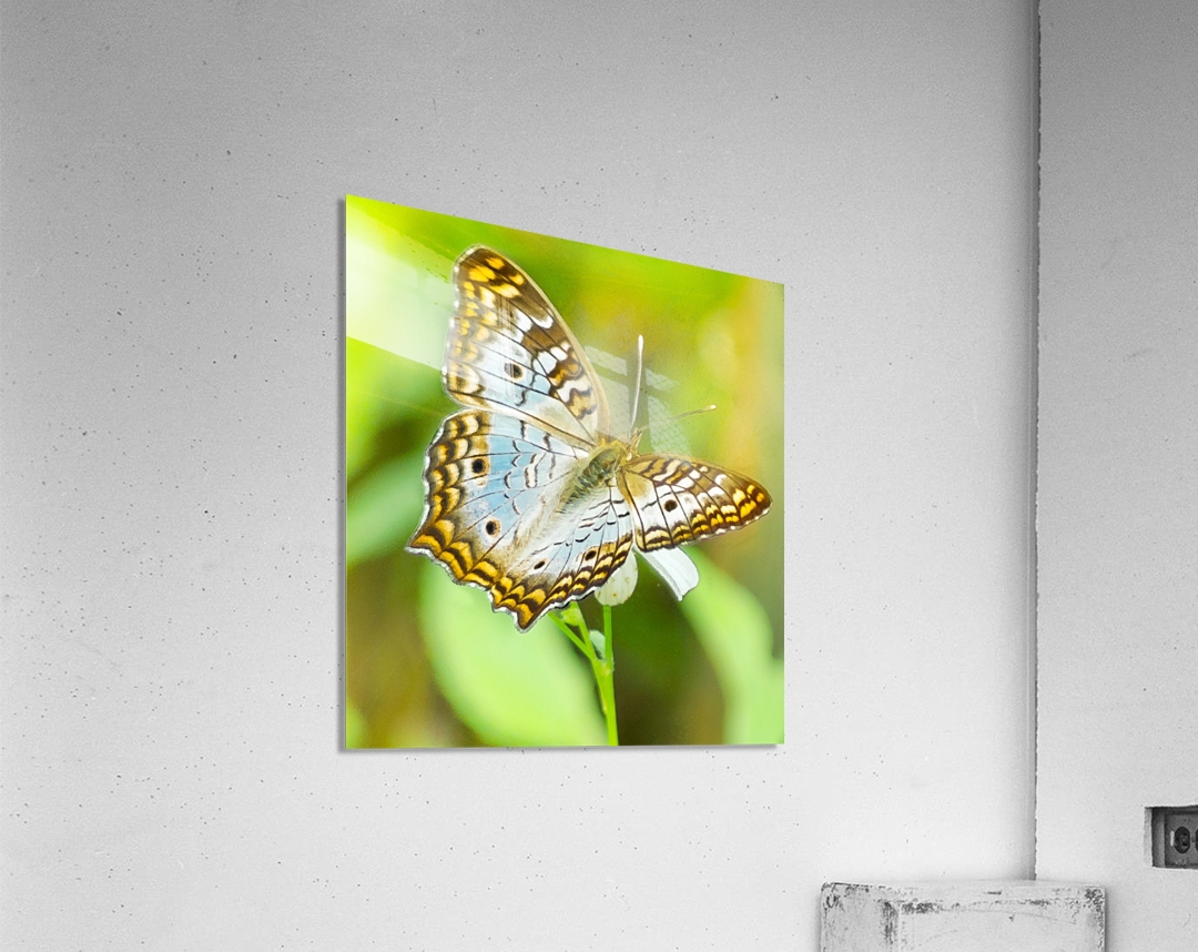 Psychedelic White Peacock Butterfly  Acrylic Print