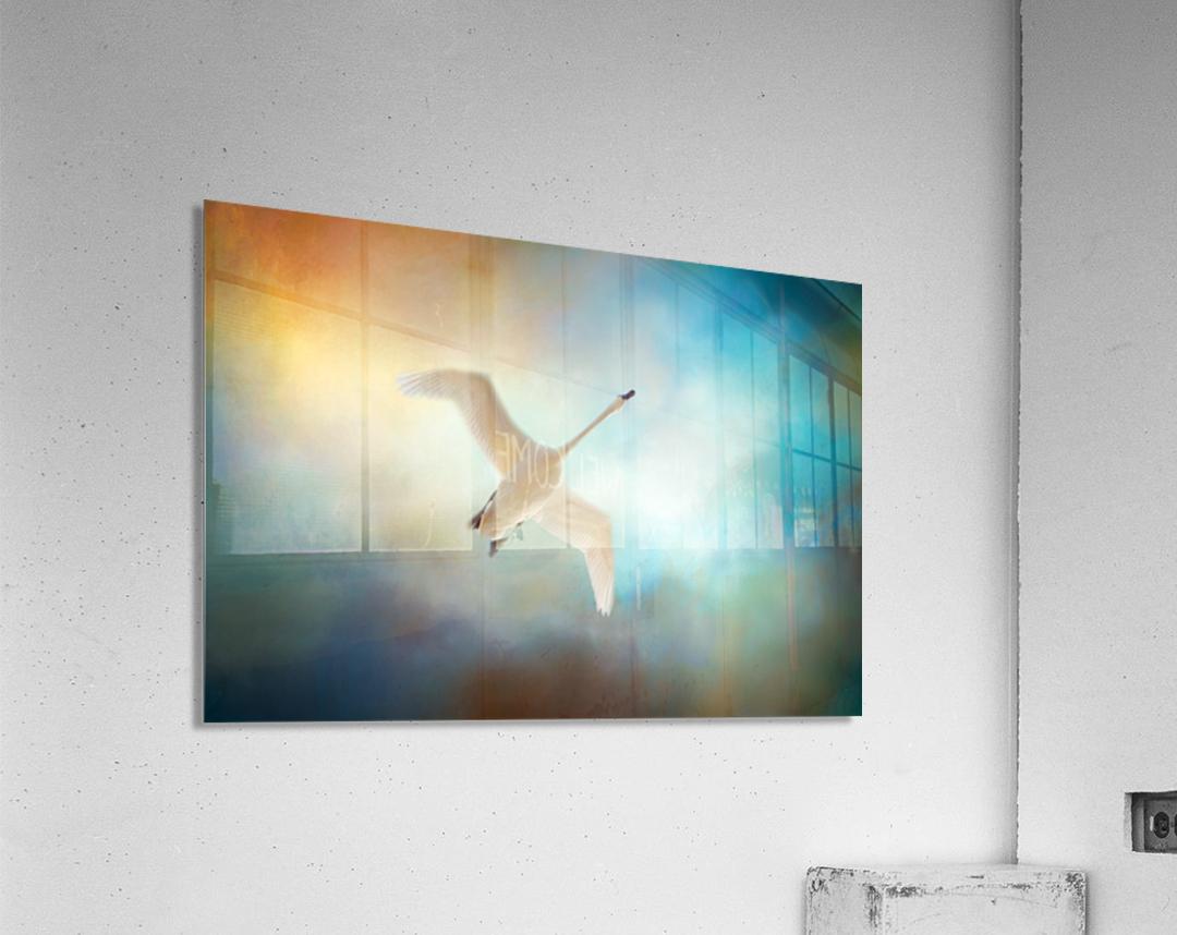Swan Wings  Acrylic Print