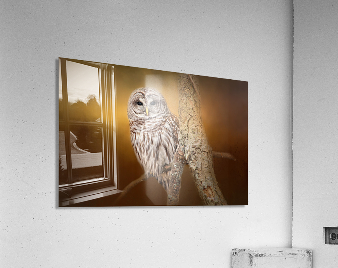 Seen  Acrylic Print