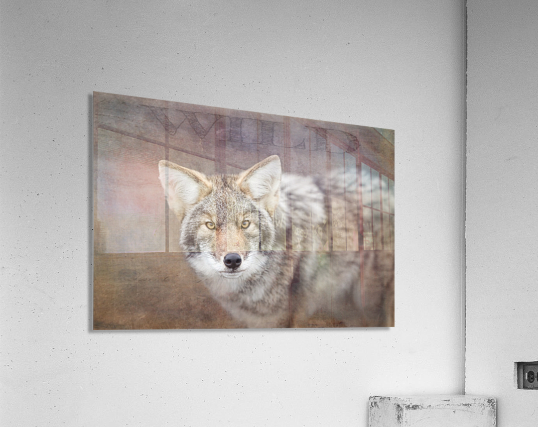 Wild  Acrylic Print