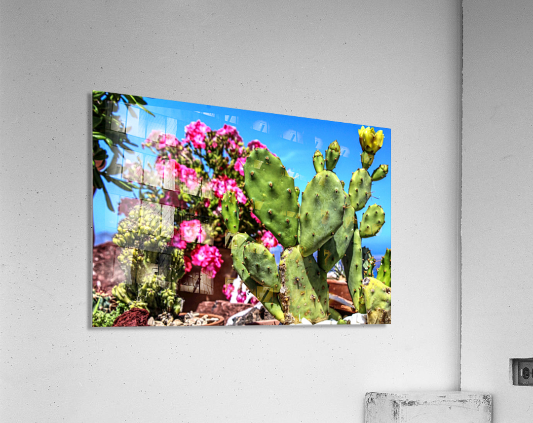 Cactus and colourful Flowers  Acrylic Print