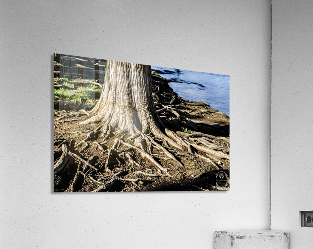 Strength Beneath  Acrylic Print