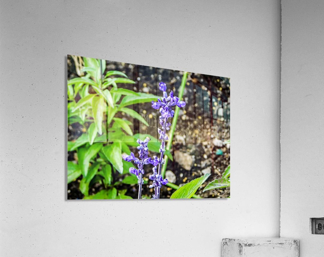 DSCN0817  Acrylic Print
