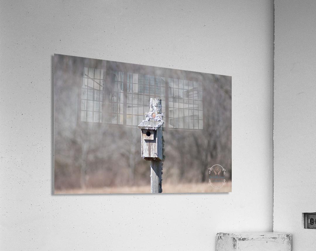 Abandoned Birdhouse   Acrylic Print