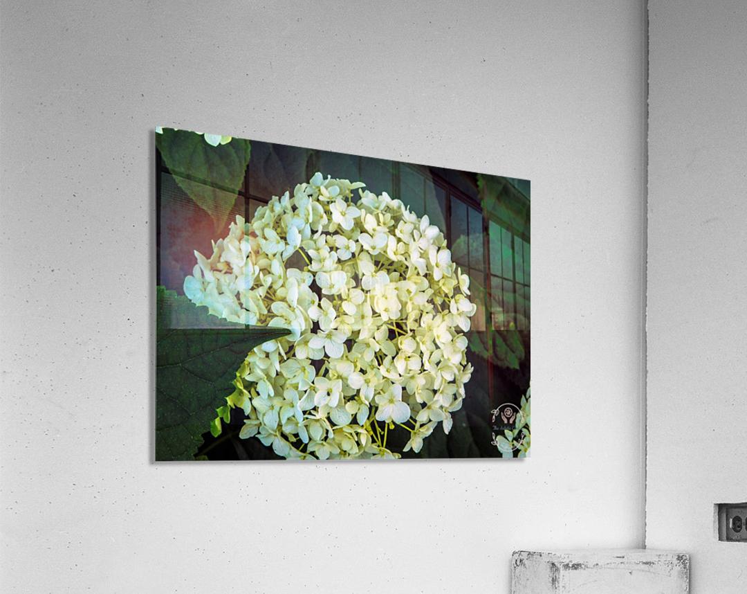 White Perfection  Acrylic Print