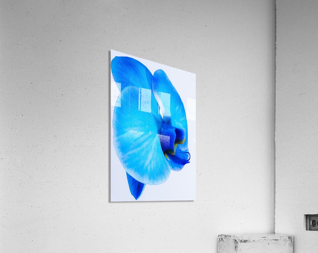ORCHIDÉE BLEUE  Acrylic Print