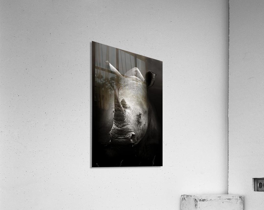Rhinoceros portrait  Acrylic Print