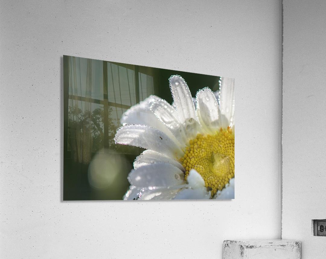 Blancheur de la rosee  Acrylic Print