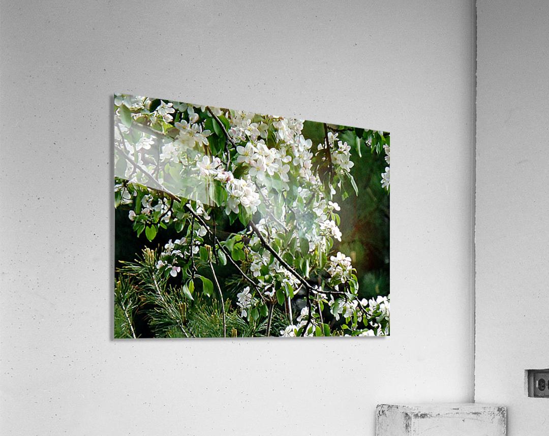 DazzleBlossoms  Acrylic Print