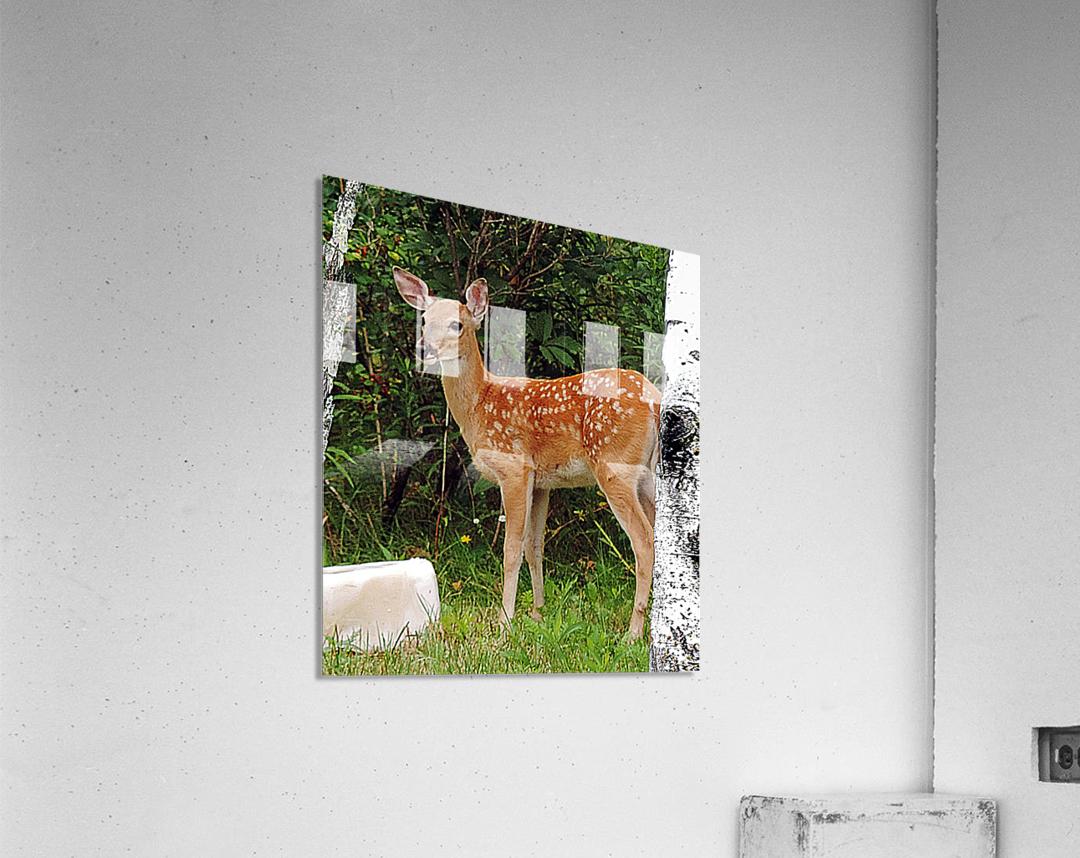 FawnBySaltBlock3  Acrylic Print