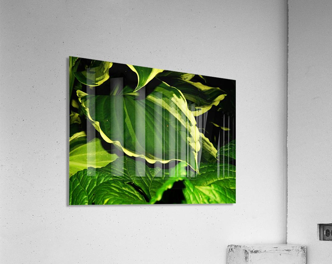 sofn-4312BAF0  Acrylic Print