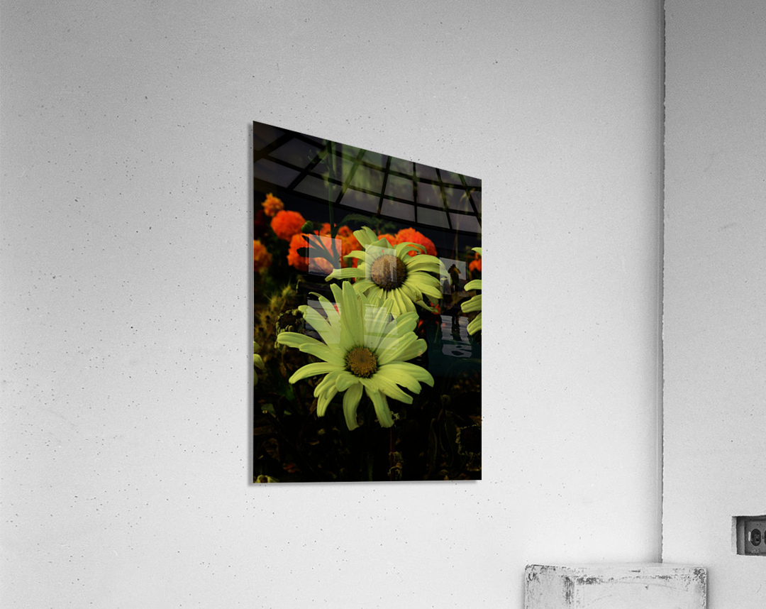 sofn-F547BA2D  Acrylic Print