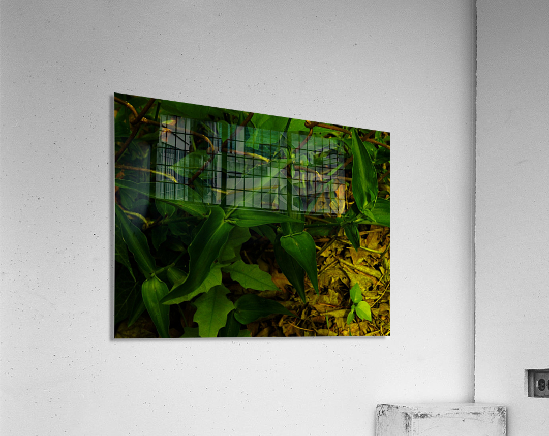 sofn-D9EA2E2F  Acrylic Print