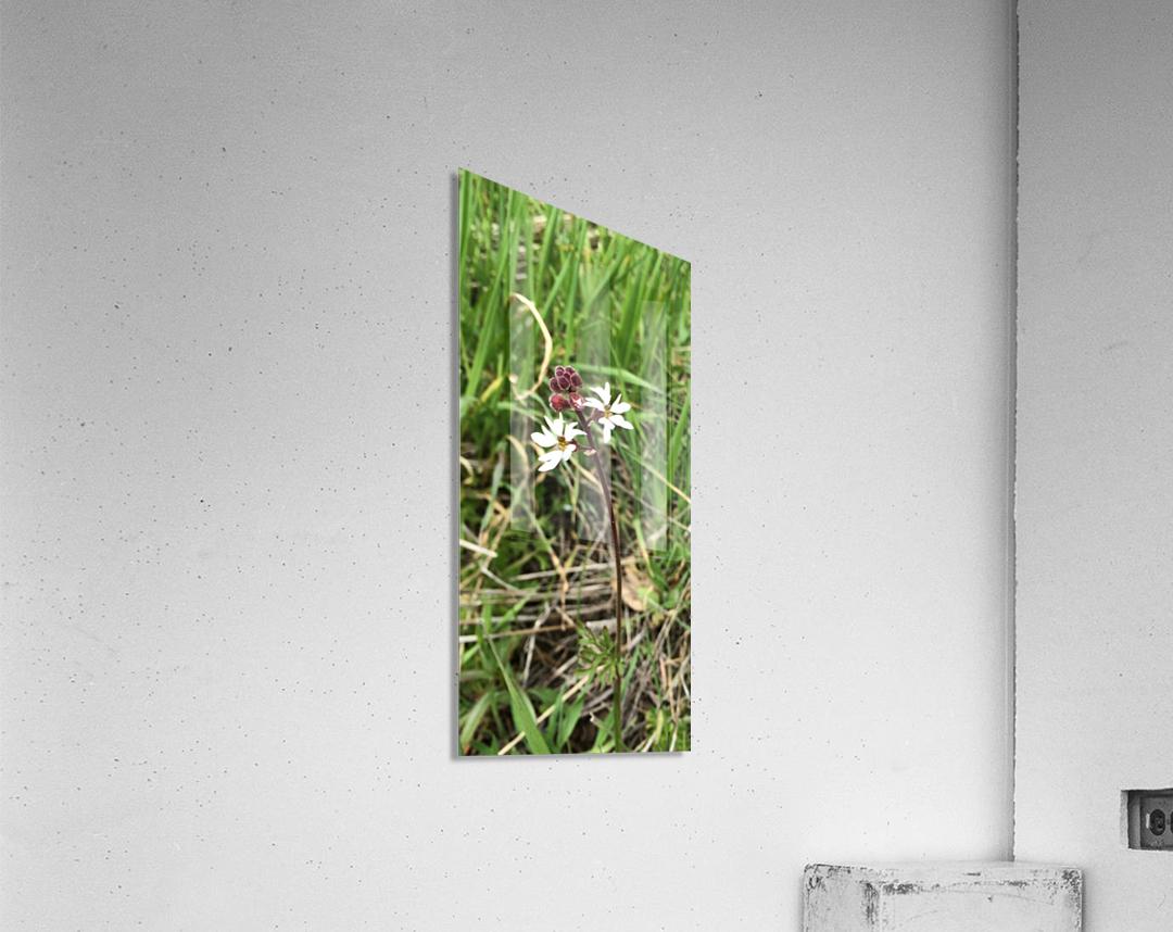 Woodland Star  Acrylic Print
