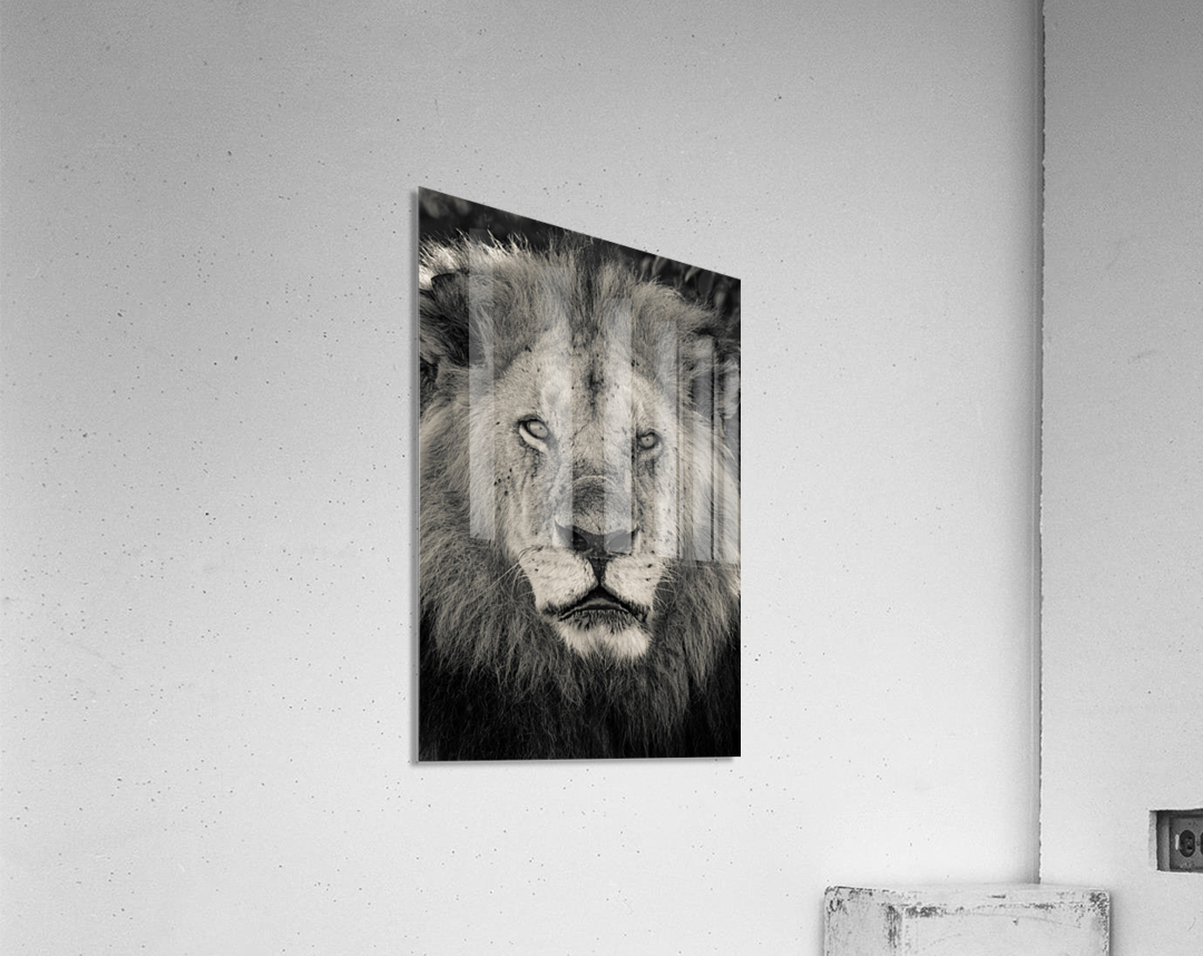 The King of South Africa - 2  Acrylic Print
